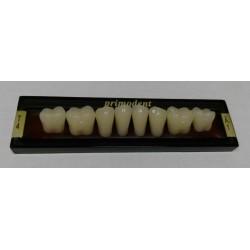 Зубы Primodent Цвет B1 жеват. гр. размер T4 (низ)