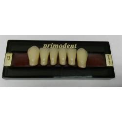 Зубы Primodent Цвет A3 фронт. гр. размер L8 (низ)