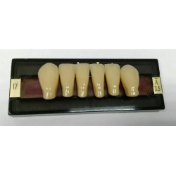 Зубы Primodent Цвет A3.5 фронт. гр. размер I5 (низ)