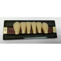 Зубы Primodent Цвет A3.5 фронт. гр. размер I7 (низ)
