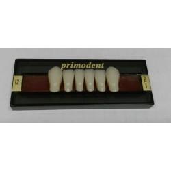 Зубы Primodent Цвет B1 фронт. гр. размер I6 (низ)