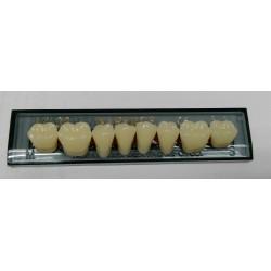 Зубы Naperce Цвет A1 жеват. гр. размер M33 (низ)
