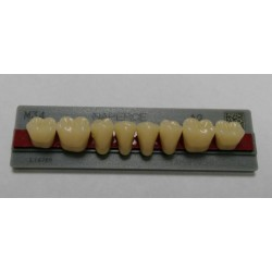 Зубы NEW ACE&Naperce Цвет A2 жеват. гр. размер M34 (низ)