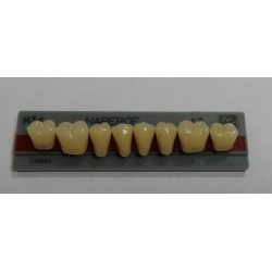 Зубы Naperce Цвет A3 жавет. гр. размер М34 (низ)