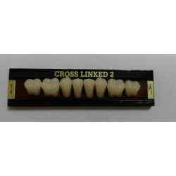 Зубы CROSS LINKED 2 Цвет A1 жеват. гр. размер Т4 (низ)